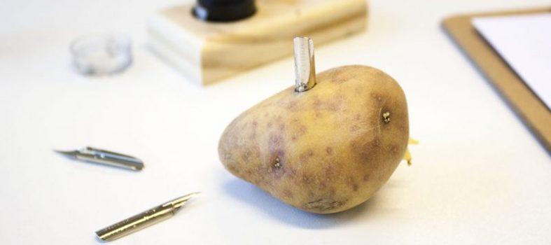 Nib in een aardappel